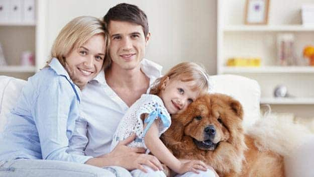 Wills & Trusts dog-young-family Direct Wills Aylestone